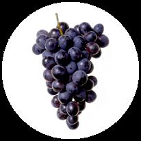 proanthocyanidinen uit druivenpit