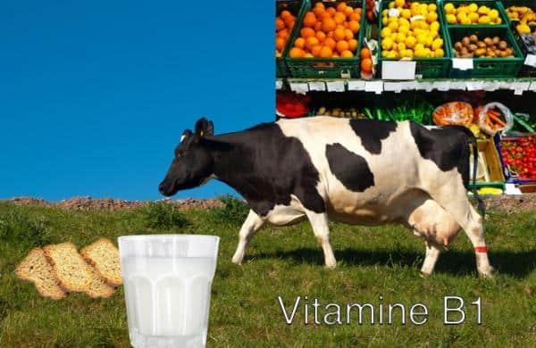 Ingrediënt van de week: vitamine B1 energie voor hoofd, hart en zenuwen