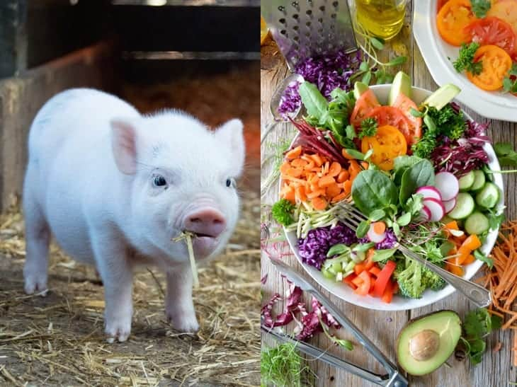 Vlees of vegetarisch?