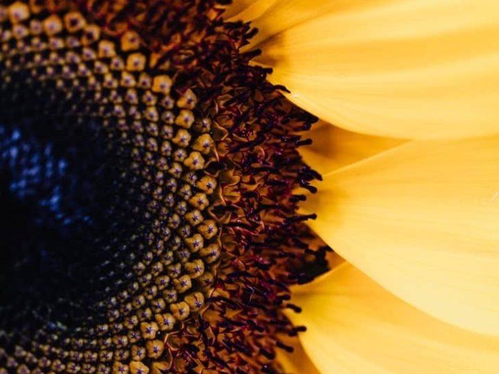 Je immuunsysteem en afweer extra in topvorm dit najaar met… vitamine D?